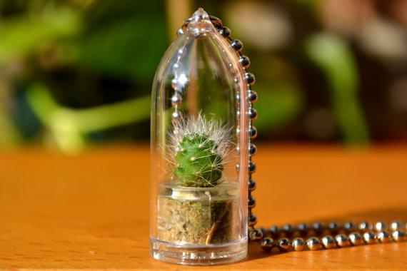 Terrarium Cactus Neck